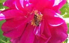 #Biene und #Blume