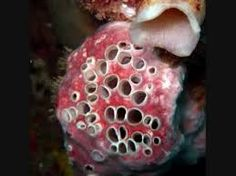100 Best B Images Boston Terrier Love Boston Terrier Puppy Boston Terrier Dog