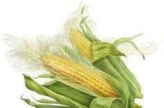 Corn Silk Tea benefits for Obesity cure, Kidney Stones, Bedwetting etc in Ayurveda