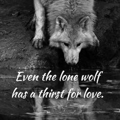 Famous and Top Wolves Quotes and The best Wolf Sayings and Quotes Image Collection. Wolf Qoutes, Lone Wolf Quotes, Wolf Artwork, Wolf Spirit Animal, Wolf Love, Wolf Pictures, She Wolf, Beautiful Wolves, Warrior Quotes