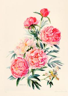 Flamboyant Peonies. Would make a gorgeous tattoo.
