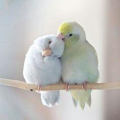 Baby Animals Super Cute, Cute Little Animals, Little Birds, Cute Birds, Pretty Birds, Beautiful Birds, Birds 2, Exotic Birds, Colorful Birds
