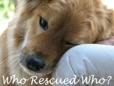 Who rescued who? Did the owner rescue the dog, or the other way around? #adoptdontshop #dogrescue