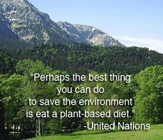 The United Nations has spoken. Save Our Earth, Save The Planet, Plant Based Diet, Plant Based Recipes, Reasons To Be Vegan, Global Warming Climate Change, Save Nature, Why Vegan, Environmentalist