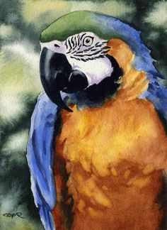 MACAW BLUE And GOLD Art Print Signed by Artist D J by k9artgallery