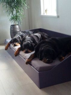 Rottweiler Pictures, Rottweiler Love, Rottweiler Puppies, Beautiful Dogs, Animals Beautiful, Pit Bull, Cute Dogs And Puppies, Doggies, Dog Rooms
