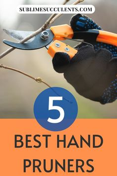 Sharing with you best hand pruners. When shopping for gardening tools, it can be easy to get overwhelmed by the number of choices. We've done the hard work of researching which hand pruners are best and gathered the results. This way, you can spend less time shopping and more time working on your succulent garden. Check this pin! #handpruners #gardeningtools #gardening Flowering Succulents, Cacti And Succulents, Cactus Care, Succulent Care, Time Shop, Gardening Tools, Hard Work, Choices, Hands