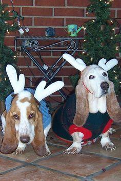 Merry Christmas Gracie & Loretta