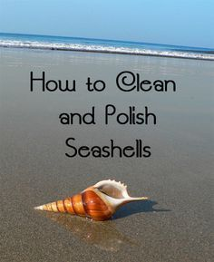 How to Clean and Polish Seashells
