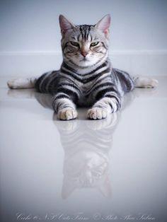 Xo I #Cats I #CatLovers I #MarvelousMeowMeows
