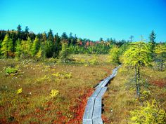 9 Boardwalks In New Hampshire To Visit This Summer- Philbrick-Cricenti Bog Trail, New London nh New England States, New England Travel, Oh The Places You'll Go, Places To Visit, My Escape, New Hampshire, Day Trips, Travel Usa, State Parks