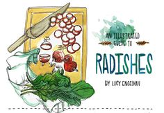 article & recipe: An Illustrated Guide to Radishes by Lucy Engelman on Eat Boutique Radish Recipes, Healthy Recipes, Radish Greens, Watermelon Radish, Logo Inspiration, Recipe Inspiration, Grow Your Own, Food Illustrations, Food Gifts