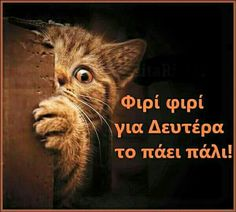 Funny Greek Quotes, Funny Quotes, Good Night, Good Morning, True Words, Happy Day, Funny Images, Picture Quotes, True Stories