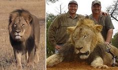 PICTURED: The American dentist who killed Cecil, Africa's most famous lion, with a bow and arrow on $55,000 hunting trip | Daily Mail Online Make this soulless POS s life a living hell. Contact the dental office and voice your outrage! This should not have happened to that beautiful animal!
