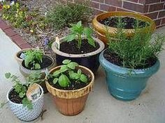 How to Grow Organic Vegetables in Pots thumbnail