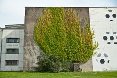 Botanical Street Art in Besancon, France by SpY