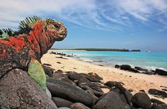 Personal Interests.      The scenery and the Galapagos Islands intrigue me because I love looking at eye catching scenery especially when I do not get to see them everyday and the Galapagos Islands have the beautiful beaches. Ecuador has towns in the middle of large mountain regions which is not something I get to experience everyday and I have always wanted to travel to the Galapagos Islands.