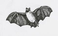 Bat by emr373 on deviantart