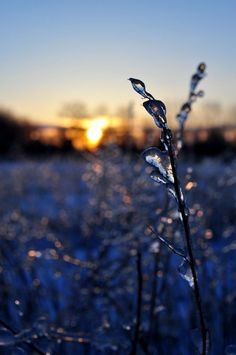 icy bokeh  by dragon-fly-to-me