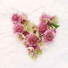 Happy Valentine's Day lovers & flower lovers!! #flowers #floralfix #flowersofinstagram  #floral #thatsdarling #allthingsbotanical #flowerslovers #flowermagic #florist #sydneyflorist #mybeautifulmess  #flashesofdelight  #vscoflowers  #makemondaypretty #happyheart #ihavethisthingwithhearts #dspink #stylingtheseasons  #floralperfection #underthefloralspell @flowerons #northernbeaches #northernbeacheslocal #freshwater #love