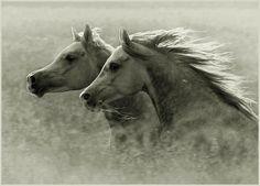 Gorgeous Greys