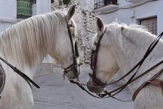 Vista caballos comienzo de ruta