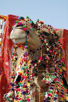 Decorated Camel in Jaisalmer by Christa Battaglia, via Flickr