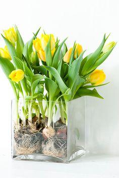 bulbs in a pot