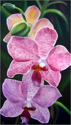 oil paintings of tropical flowers orchids by Anna Keay Fine Art Maui Hawaii