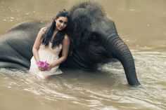 unspecified-9 - The Chai Lai Orchid Thai Elephant, The Chai, Elephant Wedding, Orchids, Amazing, Animals, Animales, Animaux, Animal