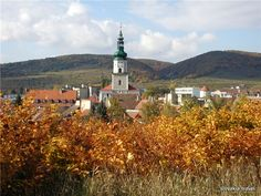 Slovakia, Modra - Town Small Carpathian Wine Route San Francisco Ferry, Europe, Building, Cravings, Travel, Wine, Buildings, Viajes, Traveling