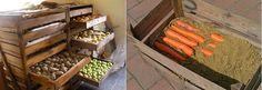 uskladneni-ovoce-a-zeleniny-v-zime-brambory-korenova-zelenina-svestky-jablka-hrusky