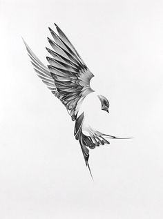 this bird with its positive/negative is what i'd like you to work with. I like the positive/negative which could be created with dot work & patterns, fluffy clouds that wrap it.