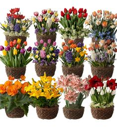 Fill every month of the year with spectacular floral displays. Our fragrant and cheerful Twelve Months of Flower Bulb Gardens are a wonderful way to add springtime to someone's day all year long. #flowergarden #flowergifts #giftsforgardeners #giftsforher