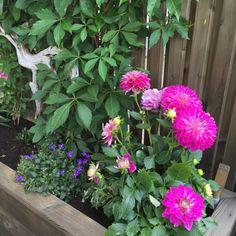 Gjør det selv – blomsterkasse i Sibirsk Lerk med selvvanning | Gjør det selv Planters, Home And Garden, Wood, Outdoors, Gardens, Diy Garden Projects, Diy, Nature, Woodwind Instrument