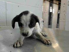 www.PetHarbor.com pet:SBCT.A480004