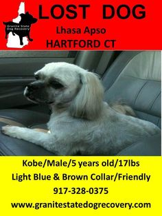 December 15, 2012    Missing Lhasa Apso in Hartford CT. Kobe is a male that is 5 years old & weighs 17 Pounds. Last Seen seen corner of Natick Street and Dart Street, Broofield St & Stone St., borderline of Hartford, CT and West Hartford, CT. Kobe was recently groomed, long hair on ears and tail, Wearing Collar light blue and brown.Please Call  917-328-0375 or 860-881-5295 Like