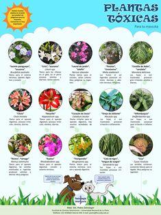 Nerium, Monstera Deliciosa, Landscape Design, Garden Design, Yorkie, Facts, Gardening, Pets, Dogs