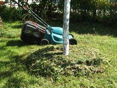 Herbe fraîchement tondue au pied d'une arbre fruitier