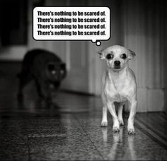 This dog is doomed!!!