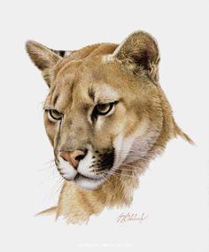 PORTRAITS OF THE BIG CATS 5
