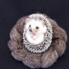 Cute Needle felted project wool animals hedgehog (Via @michiko_ohtake)