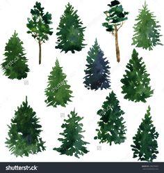 california redwood watercolor illustration - Google Search