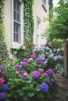 side yard with stone walk and hydrangeas - All Things Shabby and Beautiful