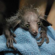 Afbeeldingsresultaat voor lemur madagascar