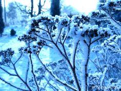 suche kwiatostany zimą
