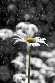 Pensieri, citazioni e poesie sulla pioggia