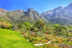 Kirstenbosch is an important botanical garden nestled at the eastern foot of Table Mountain in Cape Town. The garden is one of nine National Botanical Gardens covering five of South Africa's six different biomes and administered by the South African Natio