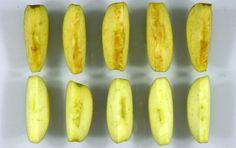 Se la #mela #OGM #canadese arriva in #Italia  – Ricordate la mela OGM che non imbrunisce mai? Beh, quella mela potrebbe presto arrivare anche in #Europa, e di conseguenza in Italia.