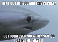 shy shark, shy shark meme, shy shark know your meme, shy shark meme maker, shark meme, sad shark meme, shark week meme, shark attack meme